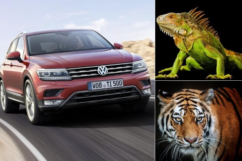 Cars With Animal Names (1)